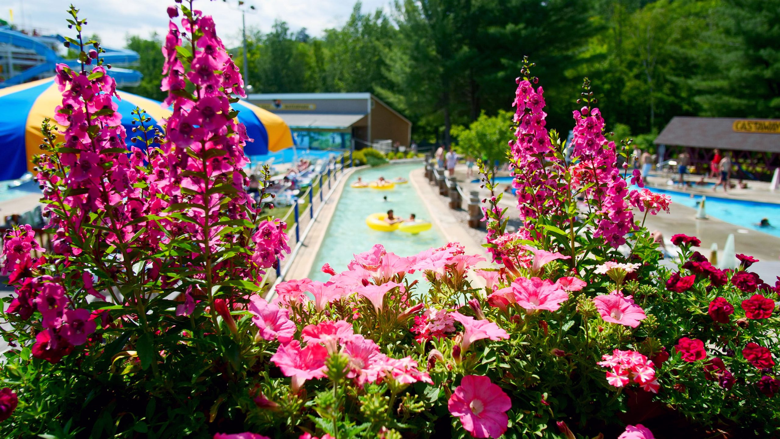Flowers with Lazy River in the Background